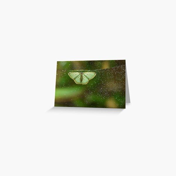 Comostola nereidaria  Greeting Card