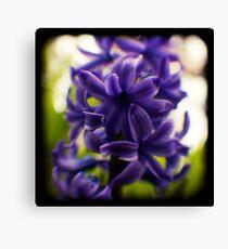 hyacinth TtV Canvas Print