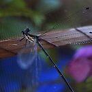 Dragonfly by WatlingBates