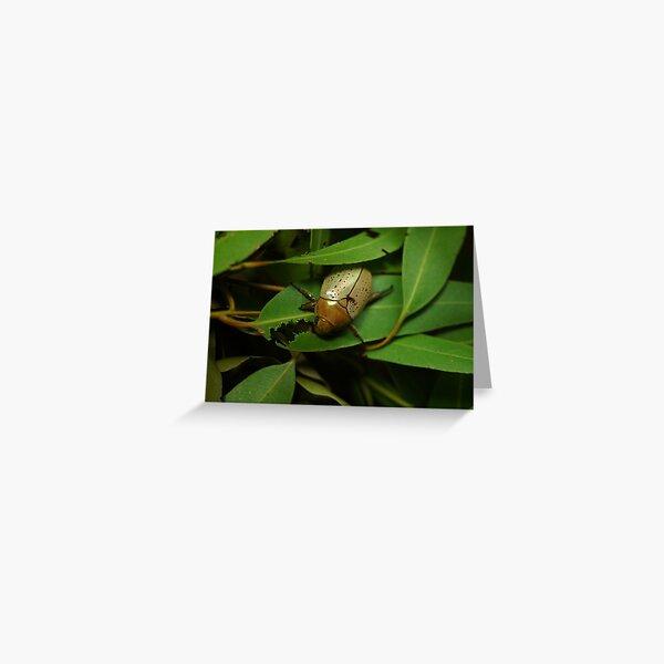 Christmas Beetle on Lemon Gum Greeting Card