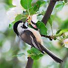 Chickadee Blossoms by Nancy Barrett