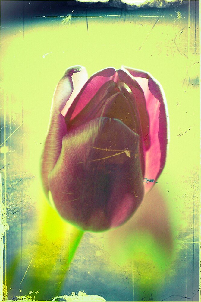 Absinthe Tulip by FlashGordon666