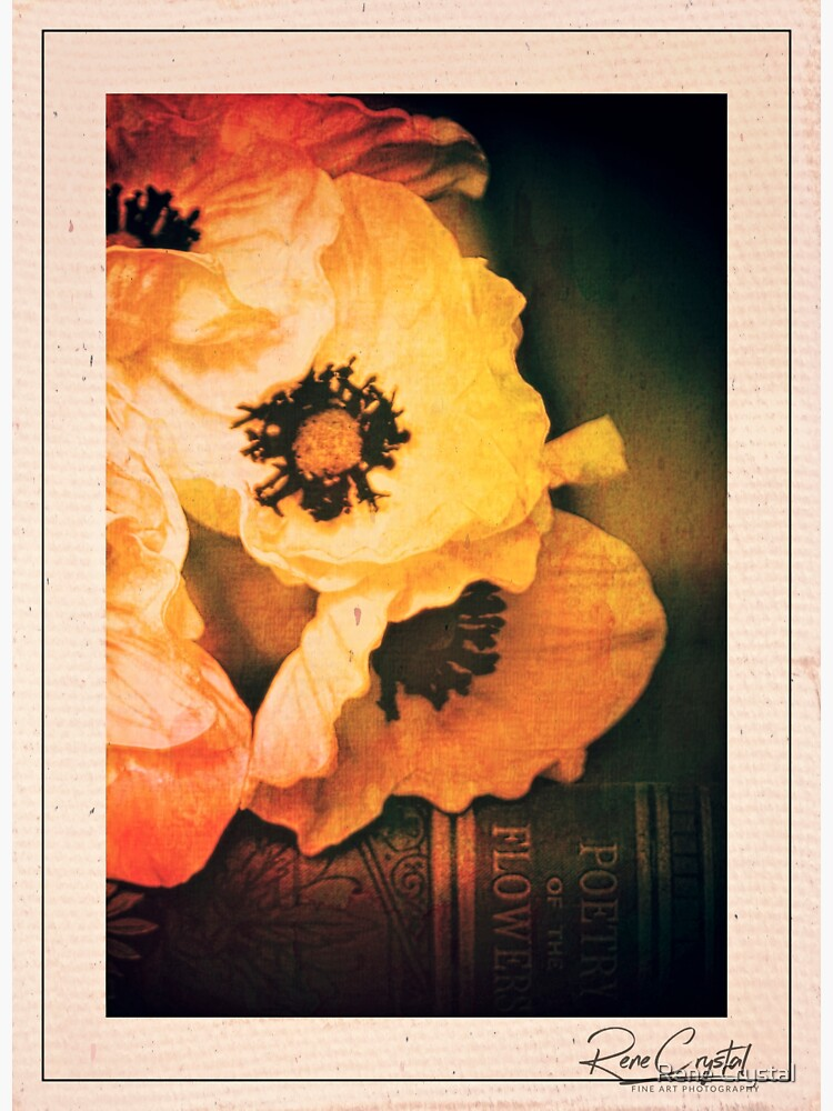 Poppies Gone Old Master by imagesbycrystal