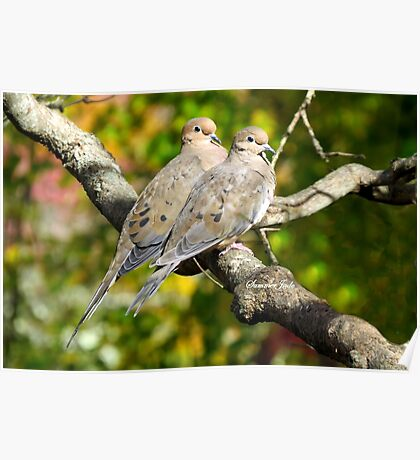 Sweethearts ~ A Pair of Doves Poster