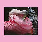 Roseate Spoonbill Grooming by glink