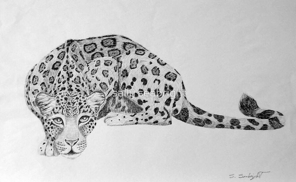 Jaguar by sally seabright