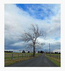Tree Along The Road Photographic Print