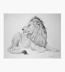 Lion #1 Photographic Print