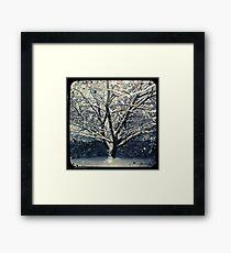 Winter Cherry Tree TtV  Framed Print