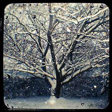 Winter Cherry Tree TtV  by adamgrahamphoto