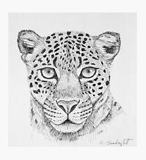 Leopard Head Photographic Print