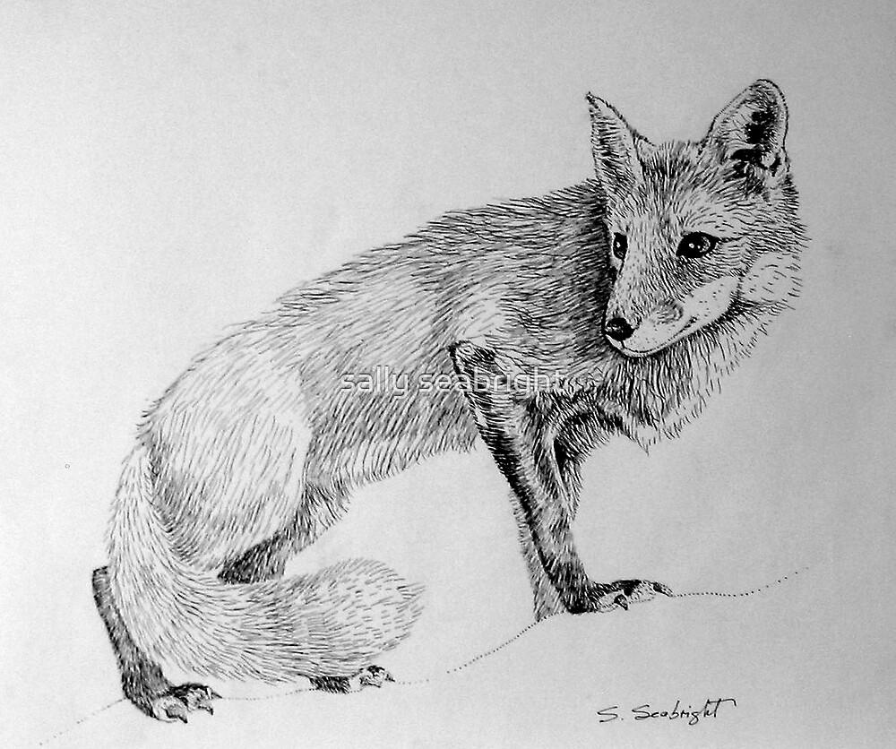 Fox by sally seabright