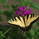 Butterfly by Rose Mary Cheek