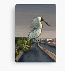 Giant Spoonbill Canvas Print