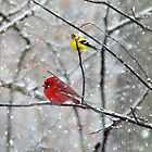 Goldfinch and Cardinal by FrankieCat