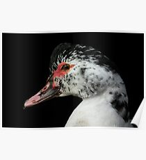 Muscovy Poster