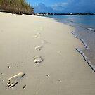 Sunrise Footprints  by Amanda Diedrick