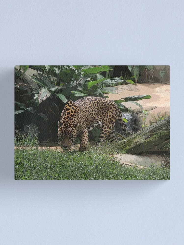 Alternate view of The jaguar (Panthera onca) Big Feline Photography Canvas Print