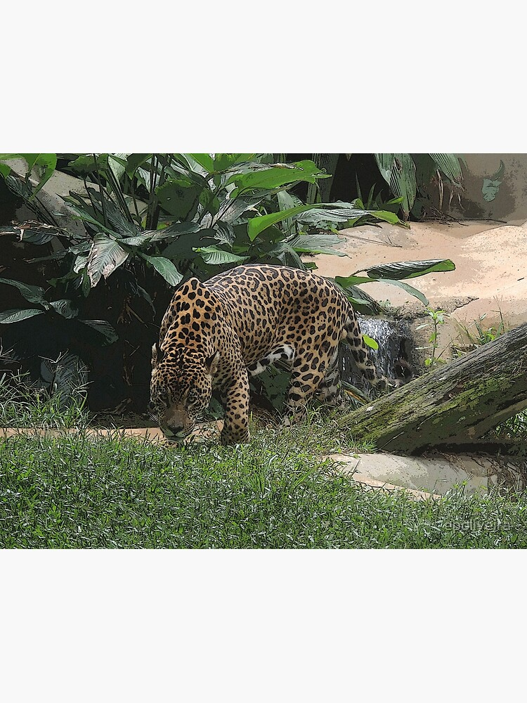 The jaguar (Panthera onca) Big Feline Photography by epoliveira
