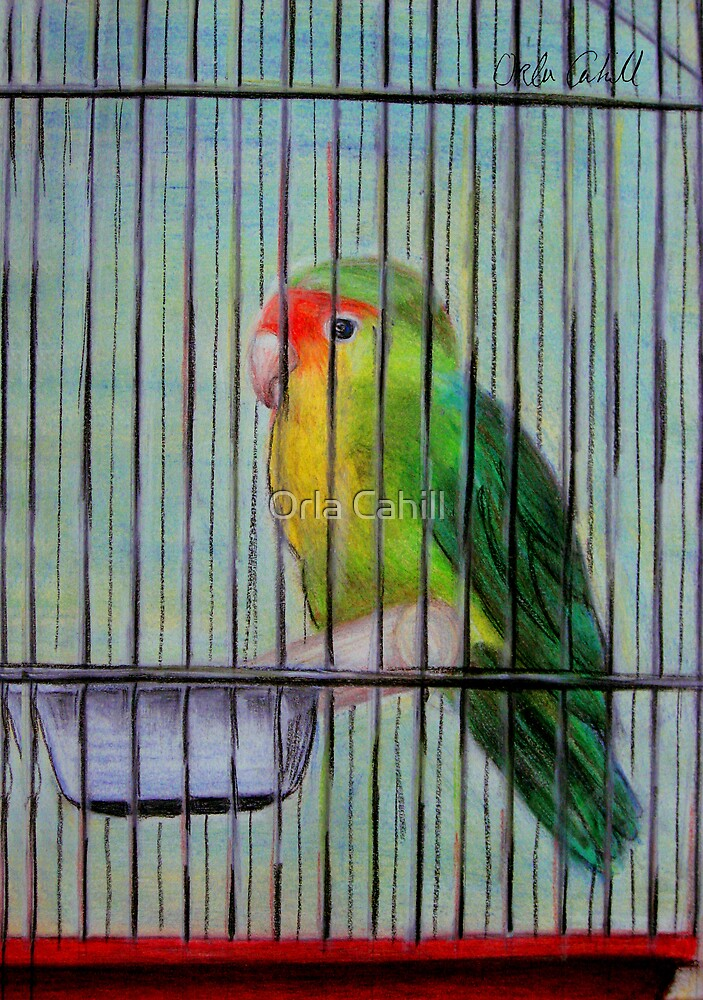 Bird in a Cage by Orla Cahill