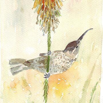 Amethyst Sunbird female by MareeClarkson