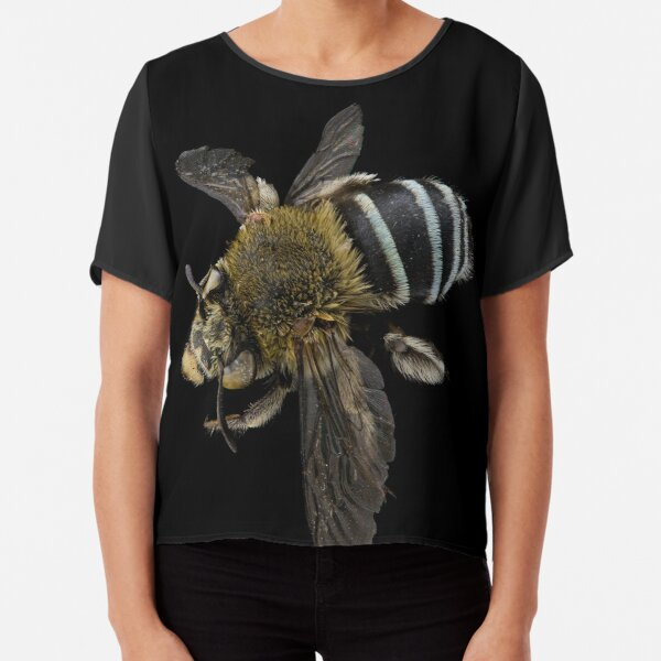 Blue banded bee (Amegilla species) Chiffon Top