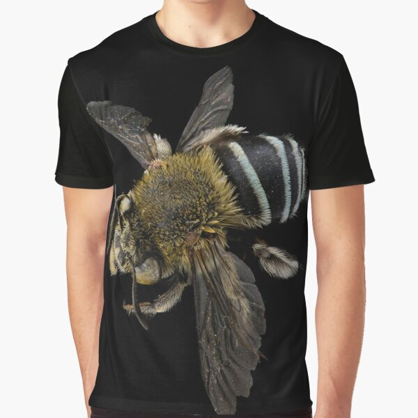 Blue banded bee (Amegilla species) Graphic T-Shirt