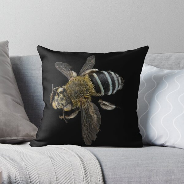 Blue banded bee (Amegilla species) Throw Pillow