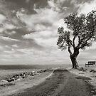 Shoal Bay - Tree by Michael Howard