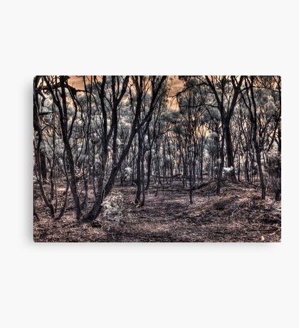 Burnt forrest Canvas Print