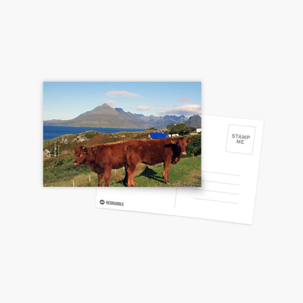 Two Headed Calf Postcard