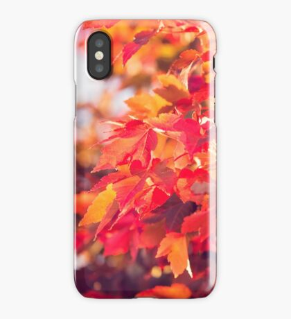 Autumn leaves of red and gold iPhone Case