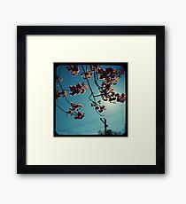 spring cherry tree ttv Framed Print