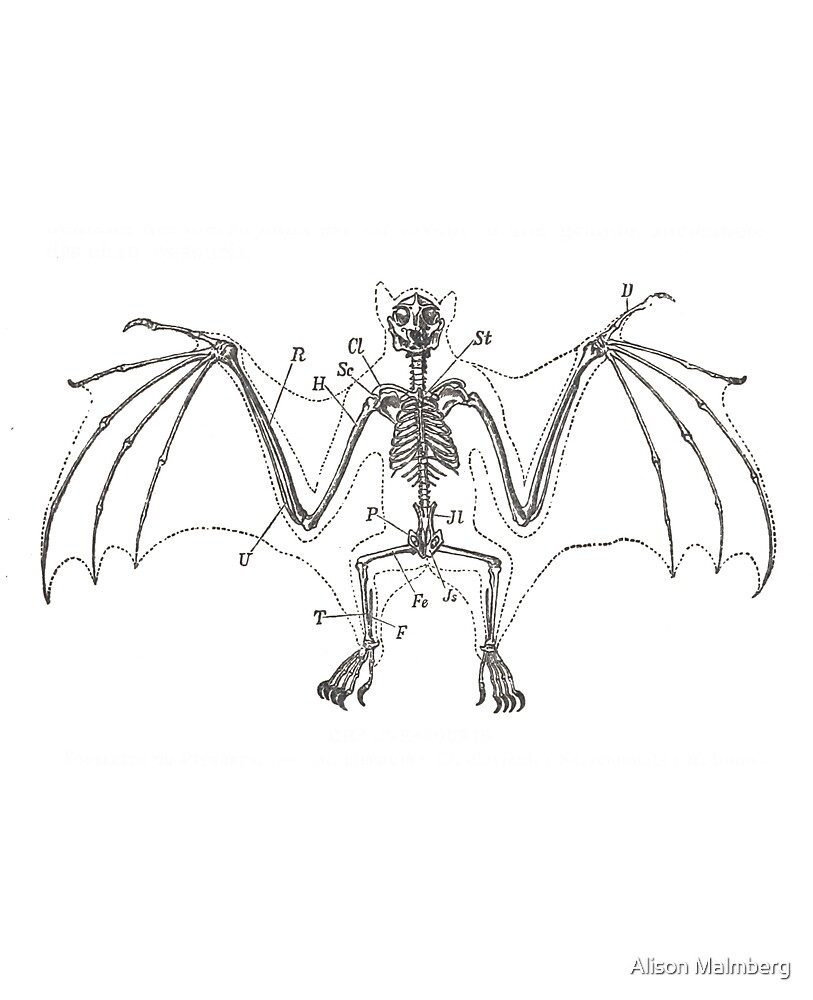 Bat Skeleton\