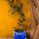 Yellow Wall, Blue Pot by Rae Tucker