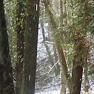 Forest Sun Rays in the Snow #6 by Dawna Morton