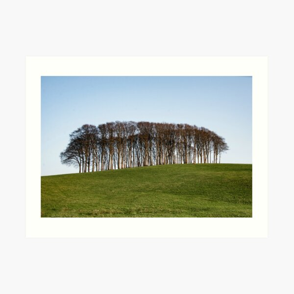 Nearly Home Trees, Coming home trees, Cornwall trees Cookworthy Knapp Cornwall,Trees at the top of the hill Art Print