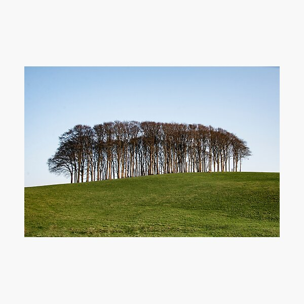 Nearly Home Trees, Coming home trees, Cornwall trees Cookworthy Knapp Cornwall,Trees at the top of the hill Photographic Print