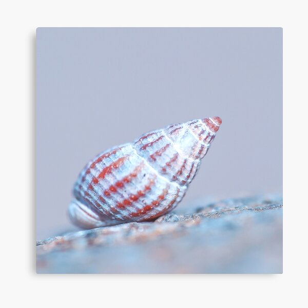Seafood's shell Canvas Print