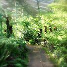 Ferns inside a hot House by cjcphotography