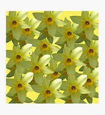 Daffodils  Love  Photographic Print