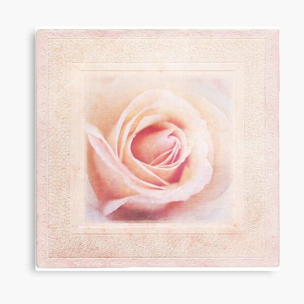 Shabby Rose Metal Print