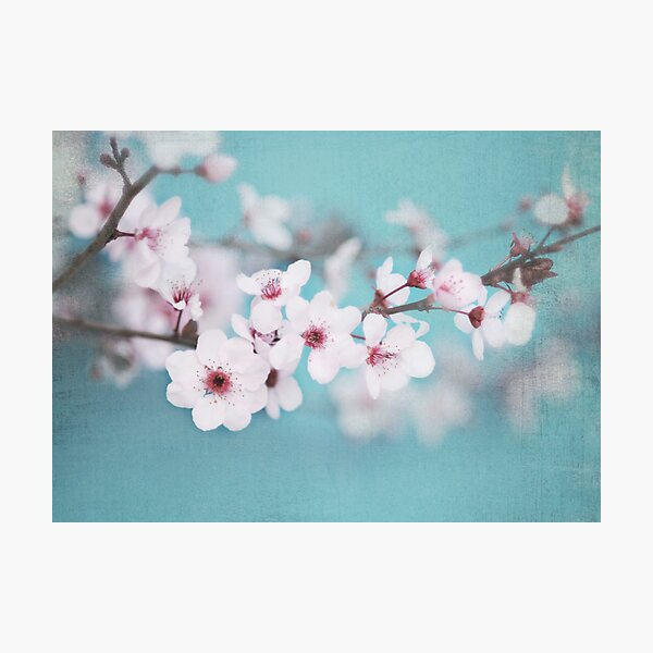 Blossoms on Blue Photographic Print