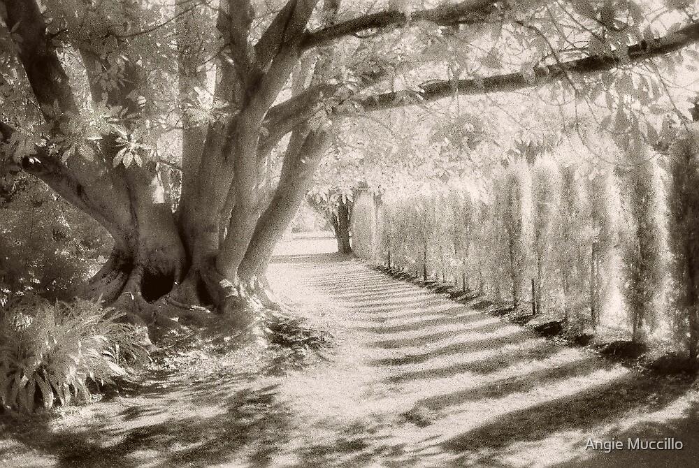 Werribee Mansion Garden by Angie Muccillo