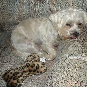 Oscar after Doggie Park by posyrosie