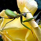 Don't You Touch My Rose! by Chuck Gardner