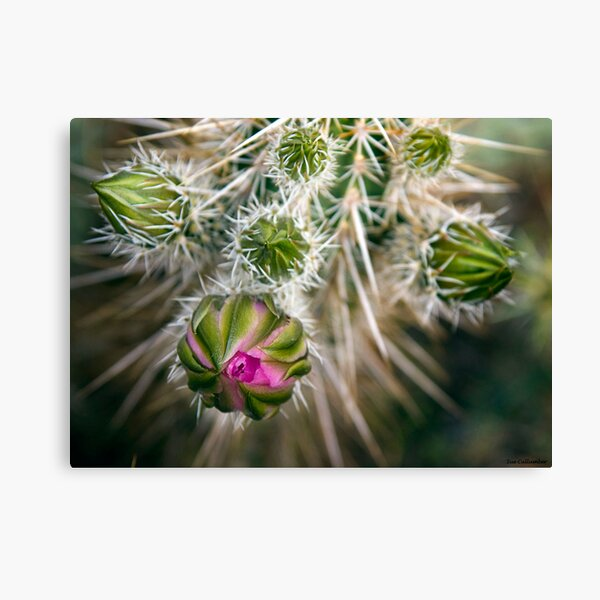 Desert Blooms Canvas Print