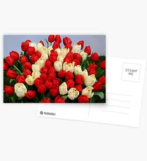 Tulip Bouquet 75 Years Postcards