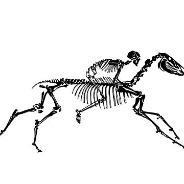 Horse Skeleton by clarafornia