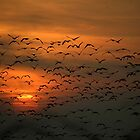 Geese in a Norfolk Sunset. by Billlee